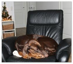 Heiko nauttii joulusta 2012