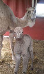 sheeba &baby girl
