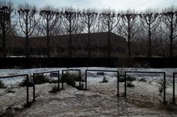 Gardens in Winter