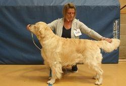 Winner of Mid Limit Dog