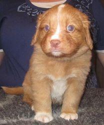 Puppy 4 - 4.5 weeks