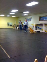 Tugging in Agility Foundations class