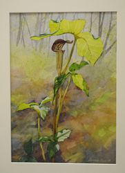 Jack in Pulpit - Original Watercolor by Jeanne McLeish