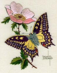 Swallowtail and dog rose