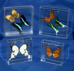One inch deep fillable frames with butterflies within