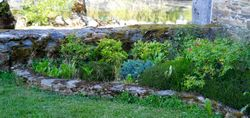 Corner garden 'before'