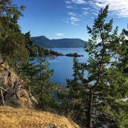 Salt Spring - Pure Nature