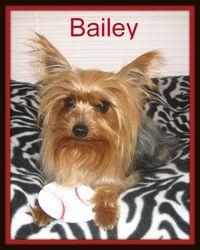 """""""Bailey"""""""
