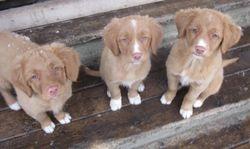Niobe, Vorena, Atia 11 weeks