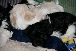 Yogi & Trixie
