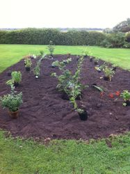 Hot bed planting in front of the proposed summer house