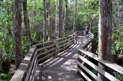 Corkscrew Boardwalk 3