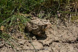 Just A Toad