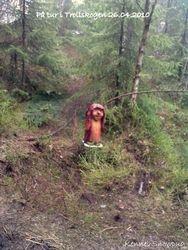 Sorceryforest