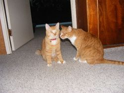 Gus flirting already!! Meet Muffin