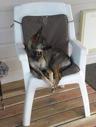 Mika, shaman dog