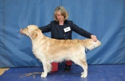 Class 9 Graduate Dog