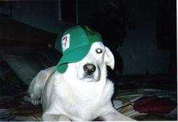McKayla aka Mickey Dog (R.I.P.)