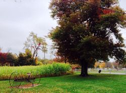 Fall in Torrington