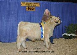 Creachann Gleann's champion bull