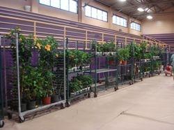Last few plants