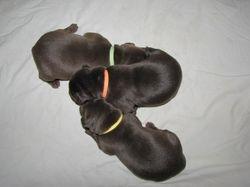 1 Week Old - 3 Females