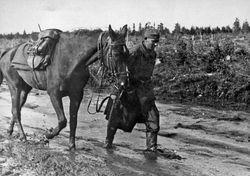 German Cavalrymen: