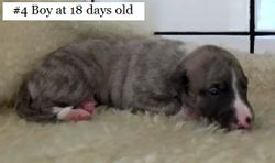 18 days old