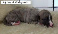 18 days eyes opening