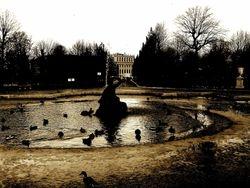Schönbrunn pond