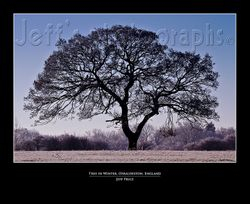 Tree in Winter, Osbaldeston, England