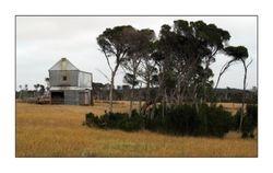 Chicory Mill