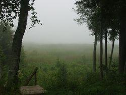 Mist 2014