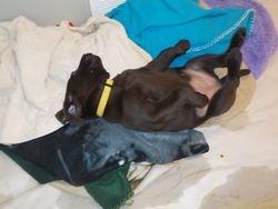 Belle's puppy belly
