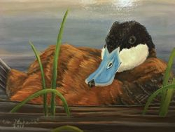 "From the Wetlands - Ruddy duck (5 by 7"" acrylic on masonite) In Private Collection"