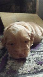 Brown boy 19 days - sweet face