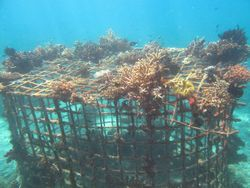 26. Fishstructure 3
