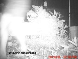 Strange stealth camera infrared photo