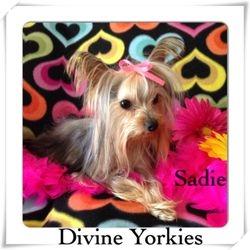 """""""Sadie"""""""