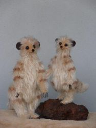 Meerkats two sizes