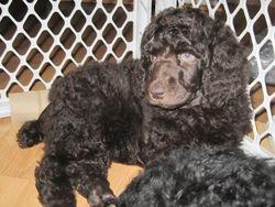 Rozalyn.  6 weeks old.