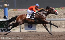 Fairplex Quarter Horse Racing