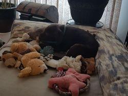 Gus is spoiled