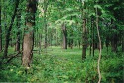 I <3 trees