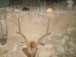 2012 Colorado Elk