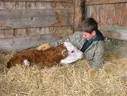Harlen & his first calf