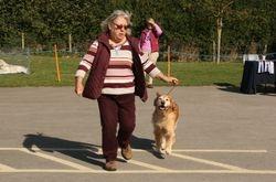 Veteran Dog