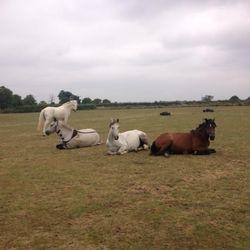 Lazy ponies