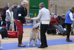 Dog CC Winner No.57 ENDELLION SPINNAKER