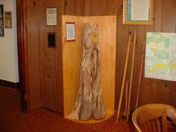 Bearing tree exhibit